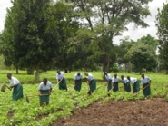 Secondary students weeding beans_185x139.jpg